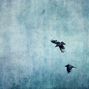Cyan Prints - Ravens flight Print by Priska Wettstein