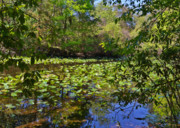 Lilly Pond Photos - Ravine Gardens - A Different Look at Florida by Christine Till