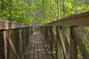 Wood Bridges Photos - Ravine Gardens - Floridas hidden treasure by Christine Till
