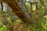 Wood Bridges Metal Prints - Ravine State Gardens Palatka Florida Metal Print by Christine Till