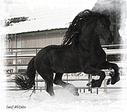 Friesian Posters - Raw Power Poster by Royal Grove Fine Art