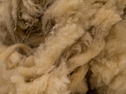 Hakon Soreide - Raw Wool 1