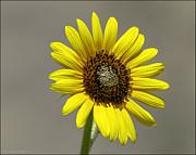 LeeAnn McLaneGoetz McLaneGoetzStudioLLCcom - Ray Flower in the Sun