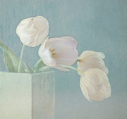 White Tulip Posters - Ray of Beauty Poster by Kim Hojnacki