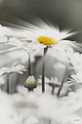 Rene Crystal - Rays Me Up...daisies