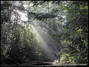 Sri Lanka Prints - Rays of Sunlight Print by Ajithaa Edirimane