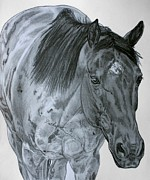 Horse Drawings Prints - Razzy Print by Lucka SR
