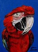Colbalt Blue Posters - Razzy Red - Bird- Macaw Poster by Grace Liberator