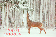 White Tail Posters - Reach For It Happy Holidays Poster by Karol  Livote