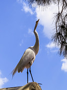 Egret Prints - Reach for the sky Print by Zulfiya Stromberg