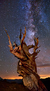 Eastern Sierra Prints - Reach for the Stars Print by Cat Connor