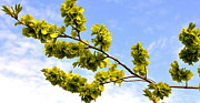 Corinne Rhode - Reaching for spring