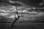 Dark Clouds Photos - Reaching by Leah Kennedy