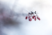Frost Photo Prints - Reaching Out Print by Aaron Aldrich