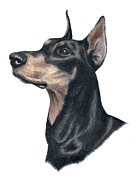 Pinscher Drawings Posters - Ready Doberman Poster by Heather Mitchell