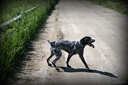 German Pointer Prints - Ready for a Walk Print by Linda Galok