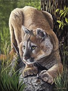 Puma Pastels - Ready to pounce by Stephanie Funke- Sweeten