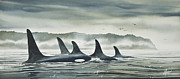 Whale Painting Framed Prints - Realm of the ORCA Framed Print by James Williamson