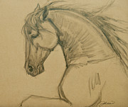 Jani Drawings Prints - Rearing Stallion Print by Jani Freimann