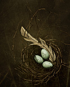 Feather Posters - Rebirth Poster by Amy Weiss