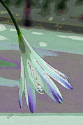 Pastel - Reclining Lily Abstract by Ben and Raisa Gertsberg