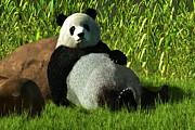 Daniel Eskridge - Reclining Panda