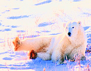 Alice Ramirez Art - Reclining Polar Bear by Alice Ramirez