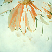 Photo Mixed Media - Reconstructed Flower No.1 by Bonnie Bruno
