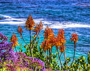 Heisler Park Prints - Red Aloe by the Pacific Print by Jim Carrell