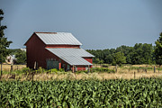 Amish Community Prints - Red Amish Barn and Corn Fields Print by Kathy Clark