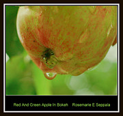 Home Grown Digital Art Framed Prints - Red And Green Apple In Bokeh Framed Print by Rosemarie E Seppala