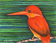 Fauna Drawings Originals - Red and Orange Kingfisher by Nina Kuriloff