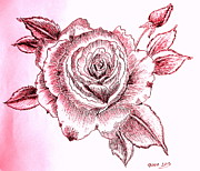 Rose Drawings Prints - Red and pink Rose Print by Gordana Stankovic