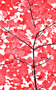 Light And Dark  Prints - Red and White Leaves Melody  Print by Jennie Marie Schell