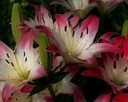 Smilin Eyes  Treasures - Red And White Lily...