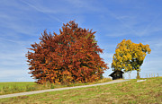 Fall Photos Prints - Red and yellow autumn colors - beautiful trees in fall Print by Matthias Hauser