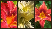 """flora Prints"" Prints - Red and Yellow Lily Collage Print by Eunice Miller"