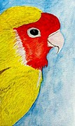 Mellany  Kettering - Red and yellow love bird