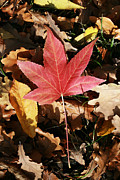 Green Leafs Originals - Red Autumn by Dumitrascu Andrei