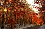Country Road Prints - Red Autumn Road in Snow Print by Terri Gostola