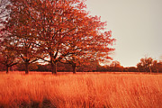 Field Metal Prints - Red Autumn Metal Print by Violet Damyan