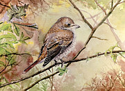 Red Backed Shrike Print by Andrew Read