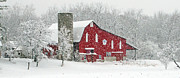 Ohio Red Prints - Red Barn in Snow Print by Jack Schultz