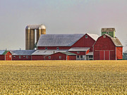 Red Barns Metal Prints - Red Barns and Wheat Field Metal Print by Jack Schultz