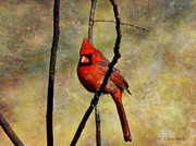 Layered Digital Art Prints - Red Beauty Print by J Larry Walker