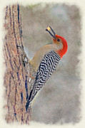 Dan Friend - Red-bellied Woodpecker on tree