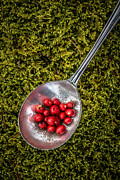 Red Berries Silver Spoon Moss Print by Edward Fielding