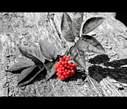 Berries Originals - Red berries by Tommy Hammarsten