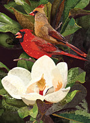 Robin Morgan - Red Birds in Magnolia