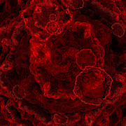Shiny Mixed Media - Red Blood Cells - Abstract - Medical - Laboratory - Square by Andee Photography